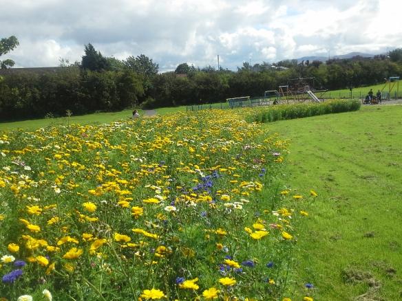 Easter Drylaw Meadow 22.08.16 (2)