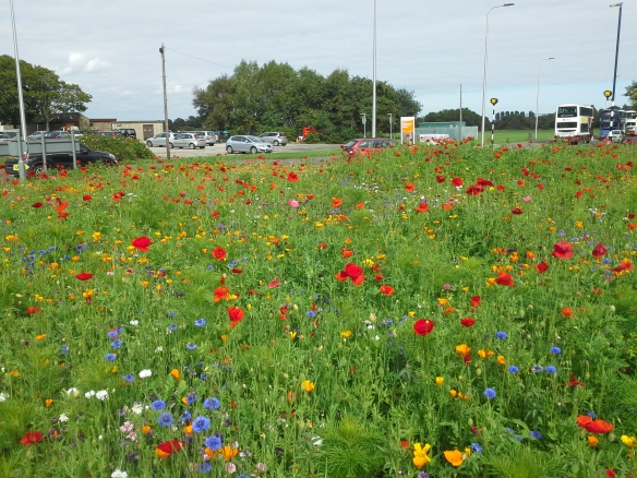 Silverknowes Roundabout1 05.09.18