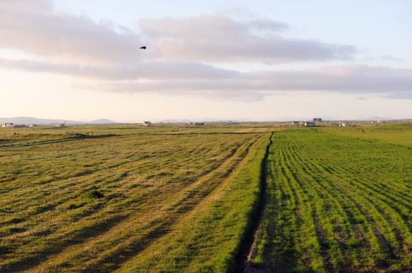 Machair grassland, Benbecula, Western Isles Area. ©Lorne Gill/SNH