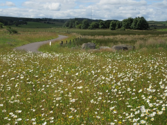 Blog - Greener Greenways - photo 3152 - a wildflower meadow created on one of the Greener Greenways routes in 2015 - Lenka Sukenikova