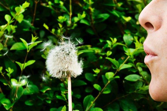 SNH SP Summer 063.jpg