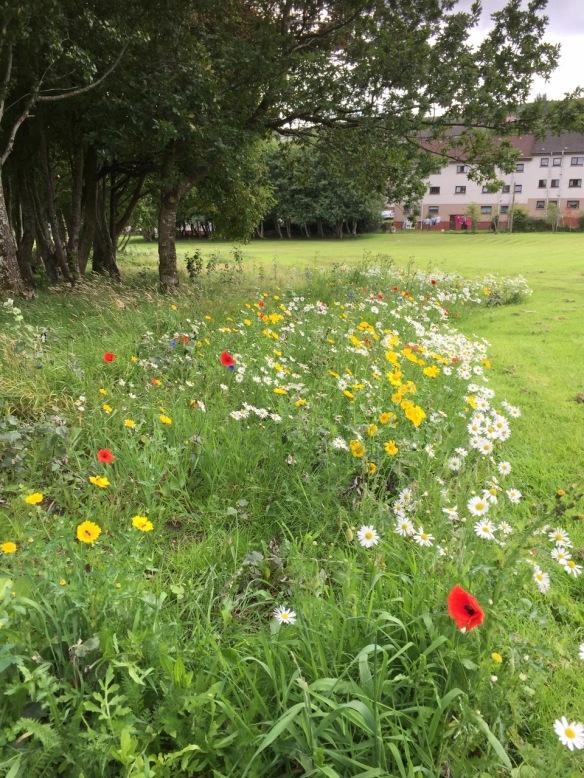 Meadow in Inverclyde