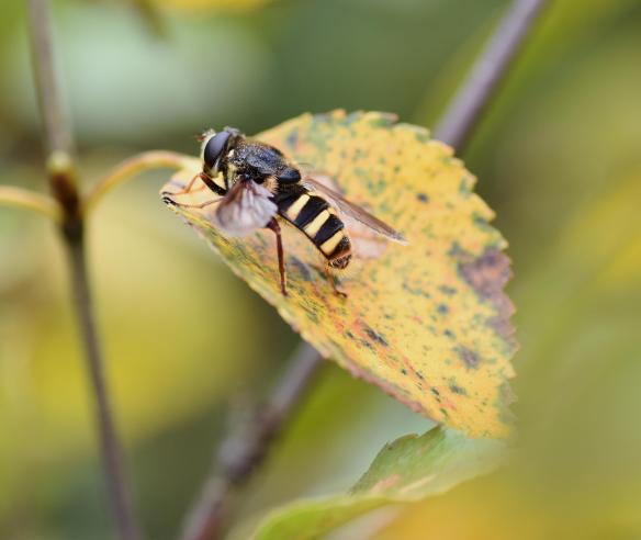 Taynish NNR Pollinator Blog September 2019_JPEG Image Original Size_m183313