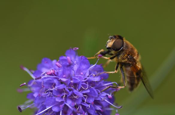 Taynish NNR Pollinator Blog September 2019_JPEG Image Original Size_m183331