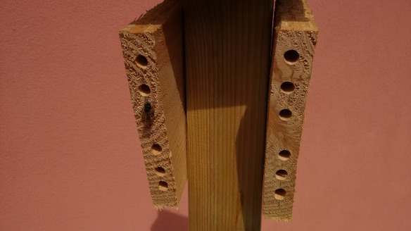 I - bees - solitary - nest - wood block