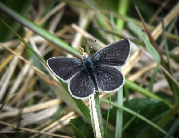 Small blue 1