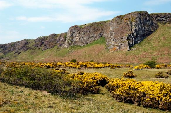 St Cyrus NNR. Grampian Area.©Lorne Gill/SNH