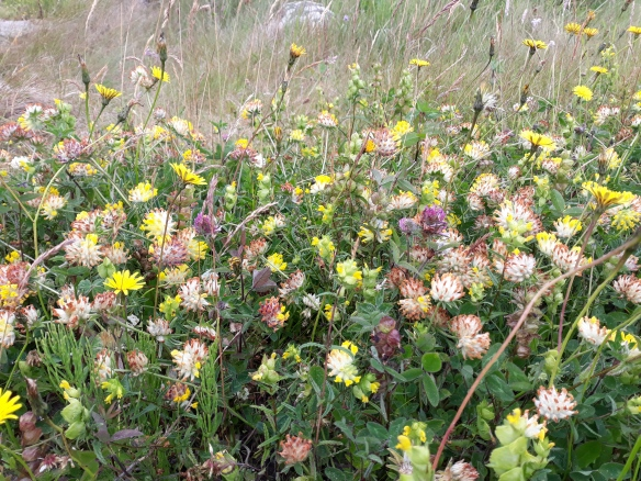 Jeannies mini machair 8July2019
