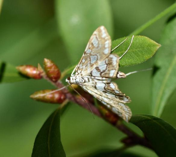 Pollinator Blog August 2020 _JPEG Image Height 720px_m208434