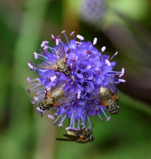 Pollinator Blog August 2020 _JPEG Image Height 720px_m208440